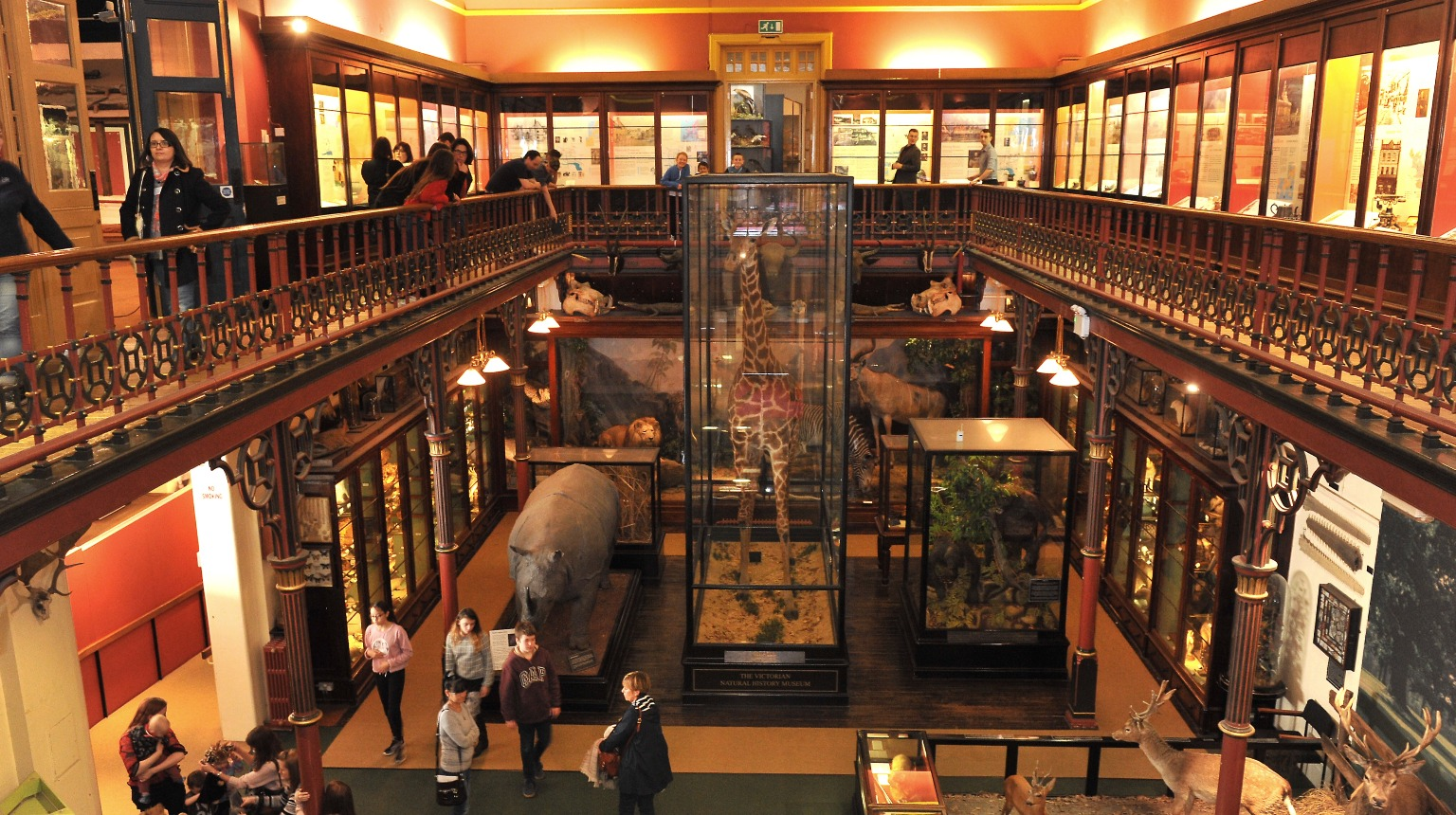 Ipswich Museum, The Victorian Natural History Gallery